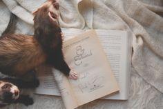 """""""Se eu não conseguia dormir, eu poderia ler."""" - Gail Carson Levine, Ella Enchanted"""