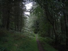 C.S. Lewis once told his brother Warren that the landscape here, in the Mourne Mountains in County Down, came closest to his idea of Narnia. This is a path through the forest at the foot of Slieve Martin.
