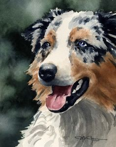 AUSTRALIAN SHEPHERD Dog Art Print Signed by Artist DJ Rogers❤️