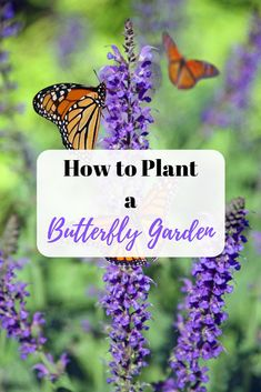 to Plant a Butterfly Garden Create a habitat garden in your backyard, and butterflies will come to you. Create a habitat garden in your backyard, and butterflies will come to you. Flower Garden Design, Vegetable Garden Design, Garden Pests, Garden Planters, Design Thinking, Wild Edibles, House Landscape, Edible Plants, Garden Care