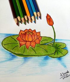 Lotus # 2 # Colored pencil drawing