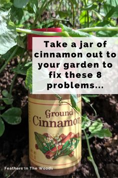 8 different uses for cinnamon in the garden. From fungus gnats to rooting hormone, cinnamon has a host of uses for both houseplants and gardens. Plus, it's organic! Here's how to use it effectively. #gardening #organicgardening #garden #gardentips
