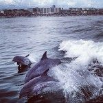 Dolphin Watching off Wildwood, NJ Web Instagram, Storms, Dolphins, Whale, I Am Awesome, Prepping, Trips, Memories, Animals