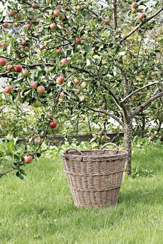 Would so love to have a small orchard someday...