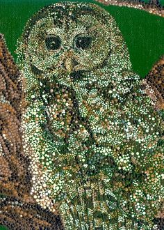 Mexican Spotted Owl (2006) by Rachel Dillon