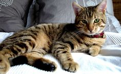 Hi everyone, Today we have some useful tips from Medicines4Pets for you on Controlling Fleas and Ticks for cats. Missed their first post on vaccination? No worries you can find it here! Controlling...
