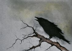 Raven 19 - original charcoal drawing dark gothic art 8x11 inch