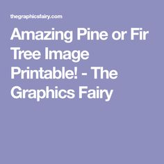 Amazing Pine or Fir Tree Image Printable! - The Graphics Fairy