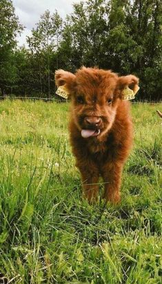Tiere ballaststoffe tiere faser laststeppin tiere ballaststof cute animal pictures happy and funny pictures Cute Baby Cow, Baby Cows, Cute Cows, Baby Baby, Baby Farm Animals, Baby Ducks, Animals Dog, Fluffy Cows, Fluffy Animals