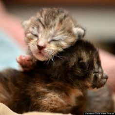 AWWWWWWWWWW cats n kittens | ... 2012, Toni's Kitty Rescue has saved the lives of 776 kittens and cats