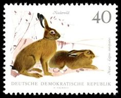 European Hare (Lepus europaeus) Bunny Painting, Postage Stamp Collection, Ladybird Books, Rabbit Art, Animal Games, Illustrations, Small Art, Fauna, Stamp Collecting