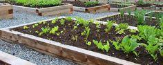 Como montar uma sementeira passo a passo! - Veja como montar passo-a-passo uma sementeira para que você também possa montar a sua de uma forma simples e eficaz!  1 - Passo:  Forrei o fundo da sementeira com minha mistura básica de terra arenosa, porque essa é a terra do meu jardim, vermiculita, para reter água e nutrientes, e um pouq... - http://ecoadubo.blog.br/ecoblog/2014/12/30/como-montar-uma-sementeira-passo-a-passo/