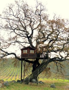 Suite Blue - Picture gallery #architecture #interiordesign #treehouse