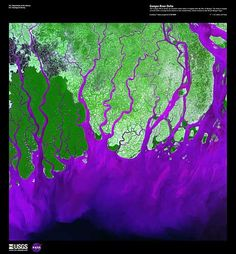 Ganges River Delta  February 1, 2000 - Landsat 7 image.     Description: The Ganges River forms an extensive delta where it empties into the Bay of Bengal. The delta is largely covered with a swamp forest known as the Sunderbans, which is home to the Royal Bengal Tiger.