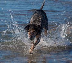 Dog Park- Ocean Beach, San Diego. Milo (2/7/2013)