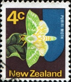 Picture of NEW ZEALAND - CIRCA A stamp printed in New Zealand shows Puriri moth butterfly, circa 1970 stock photo, images and stock photography. Nz History, Sell Stamps, Bug Art, Kiwiana, Stamp Catalogue, Stamp Printing, Old Coins, Vintage Stamps, Fauna