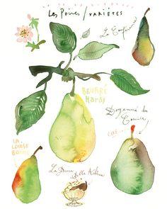 Kitchen art print, Pear varieties, Watercolor fruit, kitchen poster, food illustration, 8X10, Botanical, Art for kitchen, Green, Chartreuse. $25.00, via Etsy.