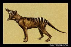 Thylacine by EmilyStepp