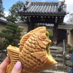 Kyoto is full of culture and the best food in Japan. Here is a guide on what to eat in Kyoto!