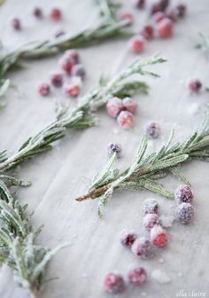 Sugared Rosemary Sprigs - Ella Claire - Jessica Dean - Sugared Rosemary Sprigs - Ella Claire Make beautiful sugared rosemary and cranberry garnish for your Christmas treats and cakes to add an elegant and edible holiday decoration to your parties - Christmas Kitchen, Christmas Cooking, Noel Christmas, Christmas Goodies, Simple Christmas, Christmas Treats, Holiday Treats, Rosemary Christmas Tree, Christmas Tea Party
