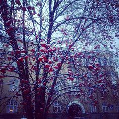 Winter in the city of Tampere Finland, ph Karoliina Karjalainen
