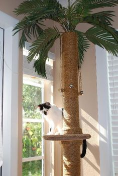 Palm tree as a cat scratching post Diy Cat Tree, Cat Towers, Cat Shelves, Shelf, Cat Playground, Cat Scratcher, Cat Room, Cat Condo, Pet Furniture