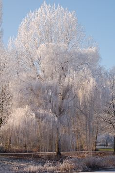 Winter in Meppel (country Holland)