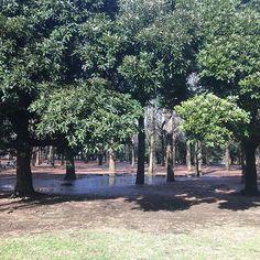 【ankoromochi9388】さんのInstagramをピンしています。 《ジブリな森。ポケモンならスイクンとかでそう。 #代々木公園 #森 #自然 #ジブリ #ポケモン #ztylus #ztylusのある生活 #カメラ男子 #加工なし》