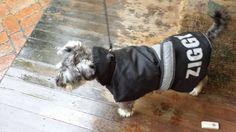 Ziggy   in his personalised reflective idpet coat