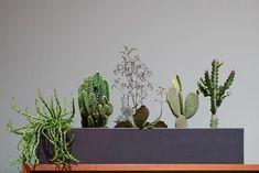 Habitare 2019   Hyggekimput ja huonekasvit – Versoileva Plants, Cactus Plants, Garden Podcast, Cottage Garden, Garden, Cottage