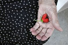 SUMMER AT GRANNY'S: This is a heart-shaped stawberry in the hand of my grandmother. Love is the message. Gyula, Hungary.