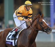 Wise Dan, winner of The Woodbine Mile for second time.