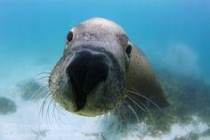 Image result for australia sea