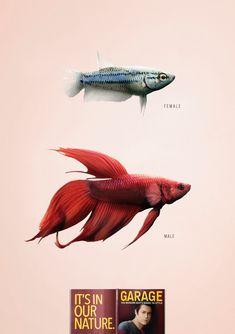 Garage: Fish