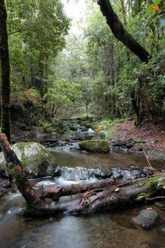 Parque Nacional de Garajonay, La Gomera●❥ʜᴀᴅᴀᴄᴀʀᴏʟɪɴᴀ❥●a