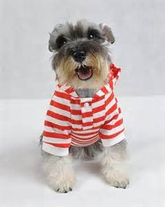 clothes puppies - Bing Images