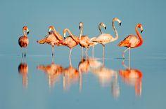 Andros Flamingos by Carlton Ward Jr