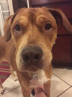 Adopted 5.22.15! Karl! A sharpei mix that's 1 year old and likes kids and other dogs. He's crate trained and housebroken. Just a cool dog!