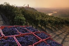 Italian Red Wines from Piedmont