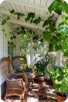 Um jardim para cuidar: Eu quero um jardim de inverno !