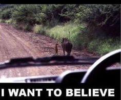 Where is Simba?