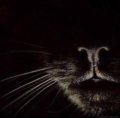 Asustar al cuervo - Black Cat - Gatos Crazy Cat Lady, Crazy Cats, Big Cats, Cool Cats, Cats And Kittens, Kitty Cats, Beautiful Cats, Animals Beautiful, Animals And Pets