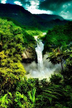 Amazon - South America