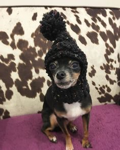 Ribbed Knit Wool Pompom Hat for Small Dog or Puppy  by TheGlim