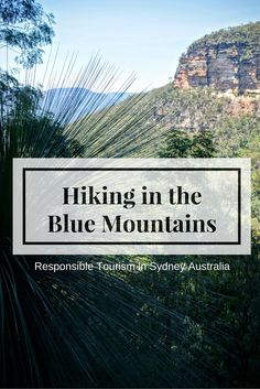 hiking in the blue mountains