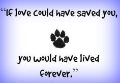 """7 Beautiful Pet Memorials and Gifts - Say Good-Bye With Love > These different t. - These different t…""""> 7 Beautiful Pet Memorials and Gifts – Say Good-Bye With Love > These dif - Pet Memorial Stones, Dog Memorial, I Love Dogs, Puppy Love, Pet Loss Grief, Loss Of Pet, Miss My Dog, Hachiko, Pet Remembrance"""