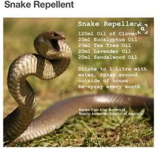 Unwanted snakes? Try this quick and easy recipe for snake repellant and bid them farewell!