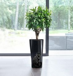 Hand Painted Flower pot Black cat  hand painted pot Hand