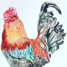 A French cock for a French organic wine bottle #eveninginlondon #springinlondon #chicken #illustrator #rooster #french #wine #design #winebottledesign #fauna #bird #london #londonartists #watercolour #etsy #ethicalhistorymuseum #artofinstagram #animals #colour #red #orange #feathers