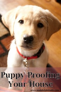 Puppy proofing your house is so important, but it's not that hard!